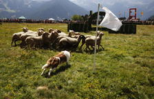 XXX edició del concurs de gossos d'atura a Canillo