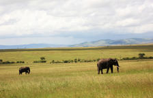 Escenari de safaris