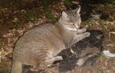 Laika denuncia la mort a trets de balins d'una gata al carrer
