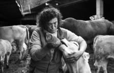 Imatges de la ramaderia, a Canillo